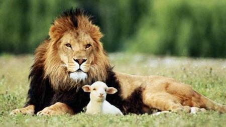 Cuento de la oveja que era un tigre (132)